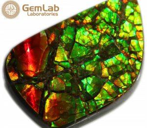 Ammolite Stone